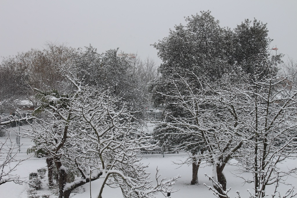 Toulouse 5cm neige 25/02/2013
