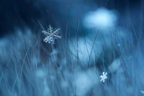 20170103_snowflake_4.jpg