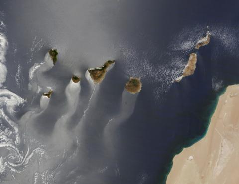 canaries-r-1680-1200.jpg